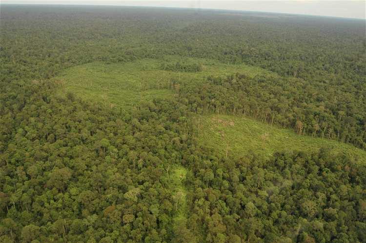 Wildlife - Aerial forest view 3 (1).JPG