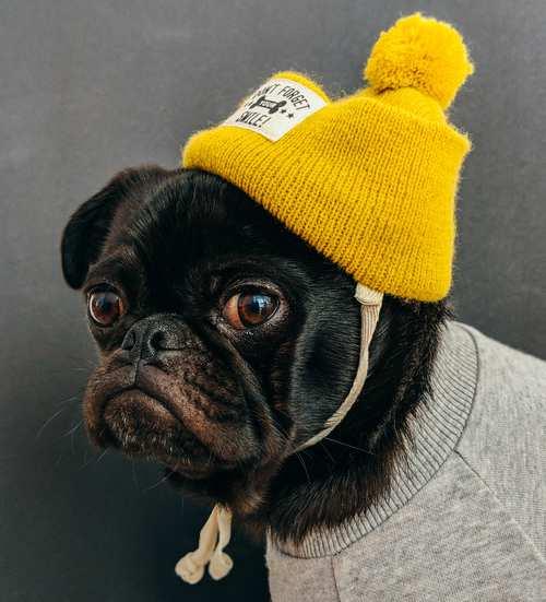 Dog dressed.jpg