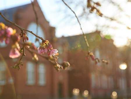 Glyntaff Campus Spring_23722.jpg