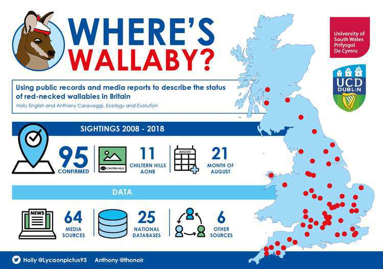 WALLBY_Infographic - Dr Anthony Caravaggi - Ecology Research