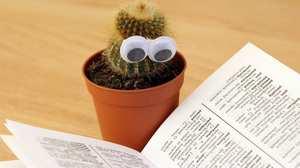 cactus read.jpg