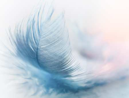 feather-3010848_640.jpg