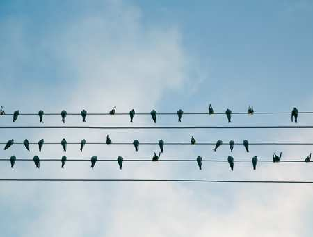 Flock of birds on a wire