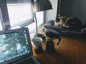 workspace with cat